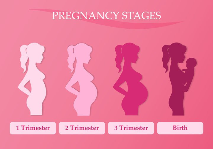 different-pregnancy-stages